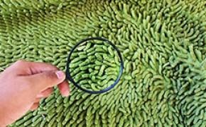 Аллергия на ковер: какие ковры подходят аллергикам